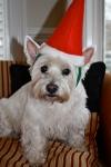 Santa Winnie