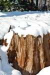 Snow Covered Tree Stump